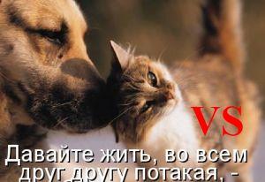 Винкс Клуб состязание петов турнир №27