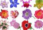 Игра Цветы на 8 марта и винкс картинки